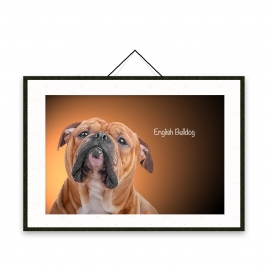 English Bulldog - Dog breeds poster