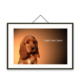 English Cocker Spaniel - Dog breeds poster