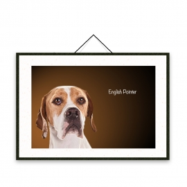 English Pointer - Dog breeds poster