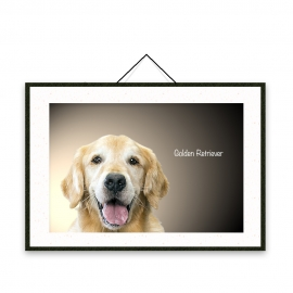 Golden Retriever - Dog breeds poster