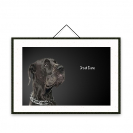 Great Dane - Dog breeds poster