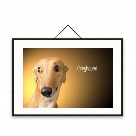 Greyhound - Dog breeds poster