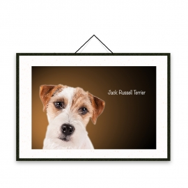 Jack Russell Terrier - Dog breeds poster