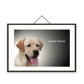 Labrador Retriever - Dog breeds poster