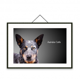 Australian Cattle - Dog breeds poster