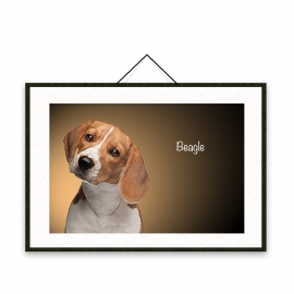 Beagle - Dog breeds poster