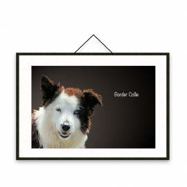 Border Collie - Dog breeds poster