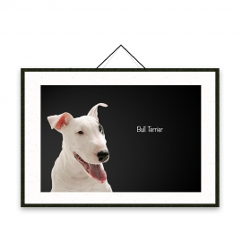 Bull Terrier - Dog breeds poster