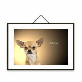 Chihuahua - Dog breeds poster