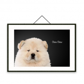 Chow Chow - Dog breeds poster