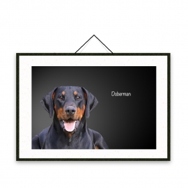 Dobermann - Dog breeds poster